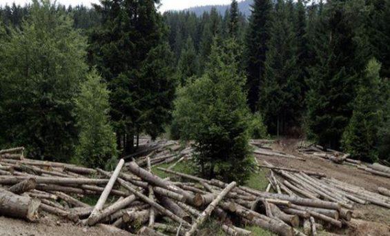 Ako želite uništiti jedan narod, prvo mu uništite šume
